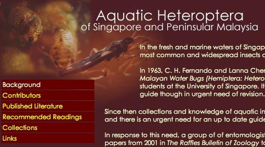 The URL is: http://rmbr.nus.edu.sg/aquaticbugs